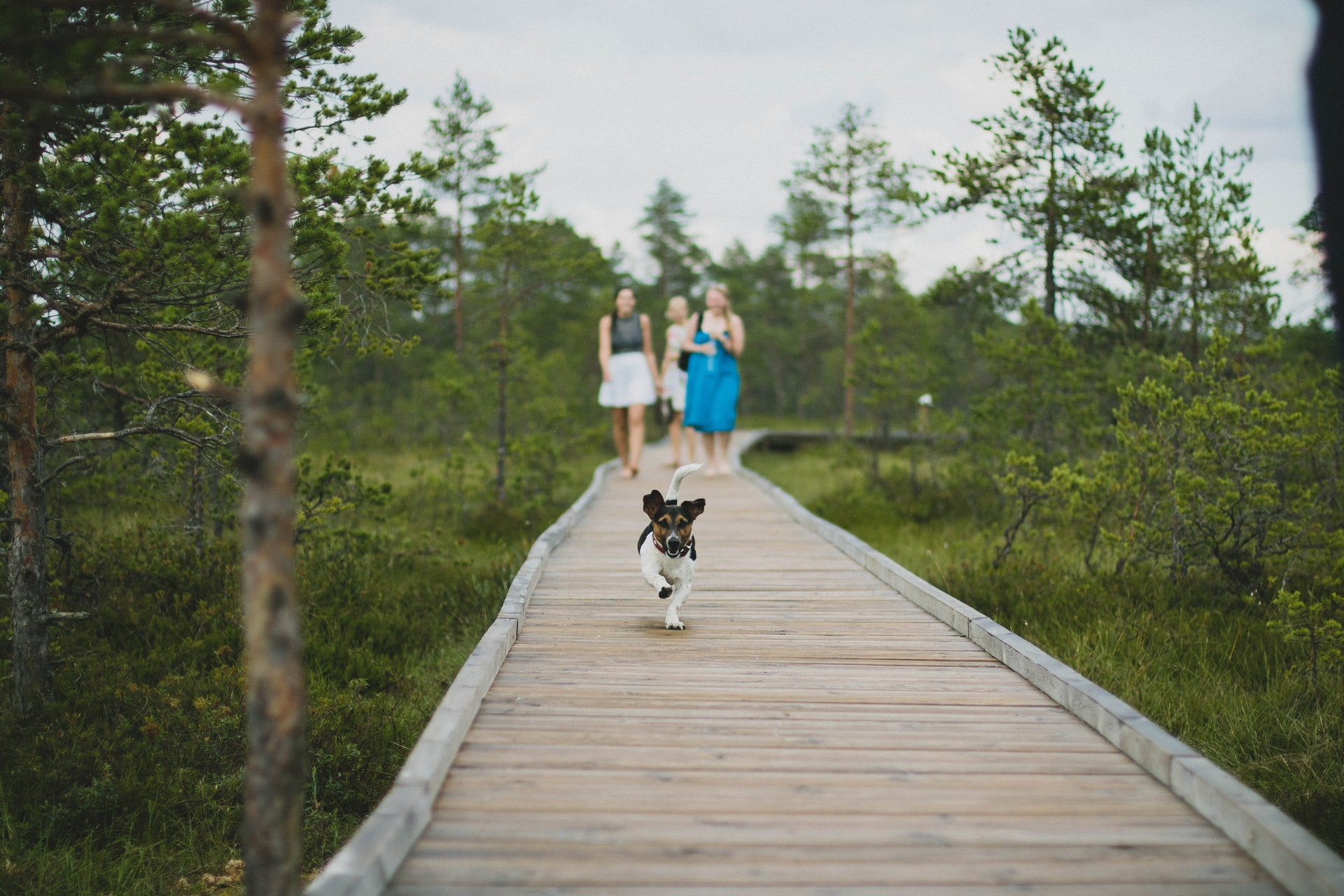 Good Dogs & Co.: 5 Ways to Make Your Walks More Exciting